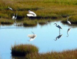egret-landing-card