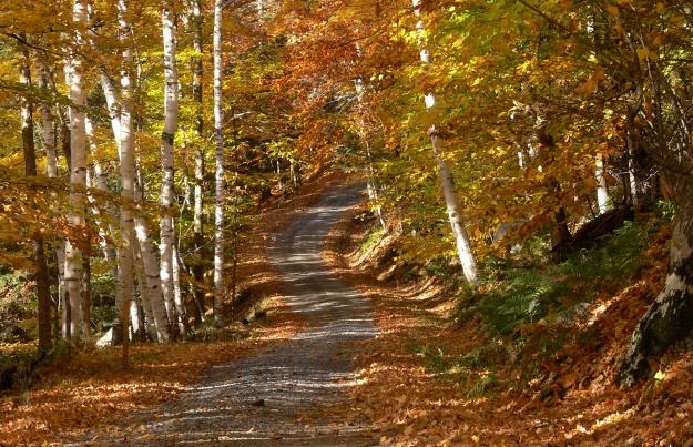 troutrock-road